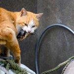 Ilha japonesa tem população de gatos 6 vezes maior do que a de humanos http://t.co/HNLlcQUCl4 #G1 http://t.co/jafXz95ycP