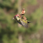 If youve heard about the #WeaselPecker, youll be pleased to see that someone has added Putin. (h/t to @sklueche) http://t.co/CJ5O4tCG6h