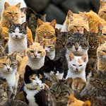 This Japanese island has been overtaken by dozens of cats http://t.co/Eb1Odr9xjL http://t.co/Y49vW7VeYj