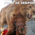 НТВ в мире животных http://t.co/irzTsobqoj