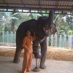 Elefante de apenas três pernas recebe nova prótese na Tailândia http://t.co/Ml7mBoLQpt #G1 http://t.co/8qpPdOTFeQ