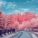 Pretty in pink: what spring looks like in infrared – in pictures http://t.co/tAOCRYy0Pe http://t.co/kL5nhWc4Vm