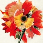 「花は咲く」コンピ発売、菅野よう子編曲の16バージョン収録 http://t.co/FrJvzw4iaH http://t.co/9QRH2GD15k