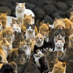 RT @ShivAroor: Awesome. RT @MailOnline: An army of feral cats rule an island in Japan http://t.co/oo20d6yjRB