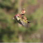 Guess this had to happen. Putin<Weasel<Woodpecker? http://t.co/iksEjbOIhv