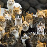 Video: A Japanese island - home to just 22 people - is being overrun by out-of-control cats http://t.co/wnzdVvl29l http://t.co/JlchKcjSkn
