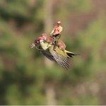 Heres a photo of Putin riding a weasel riding a woodpecker. http://t.co/bW4gW5E03i