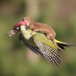A natureza é incrível! Fotógrafo flagra carona inusitada no Reino Unido http://t.co/EBPsMvW7fY http://t.co/QavScmbnGB