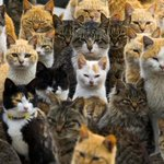 Cat island and the other photo highlights of the day http://t.co/i6l8ZsfhAy http://t.co/pJiDM0lSzT