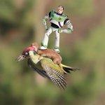 Imagem de furão voando de carona em pica-pau vira meme. Veja as melhores montagens http://t.co/McUvaYO9pQ http://t.co/PIibe3aRTU