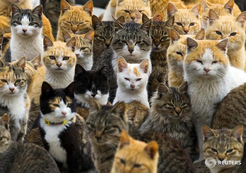 PHOTOS: On a remote island in southern Japan, cats outnumber humans six to one. http://t.co/Y3xBeAS2H4