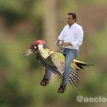 Fotógrafo flagra furão voando de carona em pica-pau http://t.co/VcEkB9uLuh