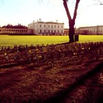 Daffodils starting to emerge! @TQHGreenwich #greenwich #Spring http://t.co/oqMmDTblsZ