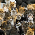 Welcome to Cat Island http://t.co/ClujyKcygm http://t.co/hC02KehPbP