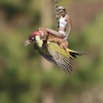 O furão pegando carona no pica-pau virou meme http://t.co/mAvNQDGRu1 http://t.co/7KR6FxQ7lD