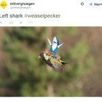 Internautas pegam carona em foto de pica-pau e furão e criam montagens: http://t.co/O2P7Amfl4G #G1 http://t.co/h21jilGl7o