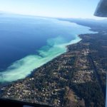 MT @PSFcory What do you think the herring spawn along Vancouver Island looks like from the air? http://t.co/NmQFB7eZXV