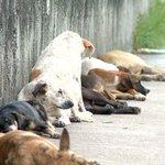 Família cuida de abrigo com mais de 50 cães para adoção no Espírito Santo http://t.co/TPLiDEeobW #G1 http://t.co/gHgc0f7Tqn