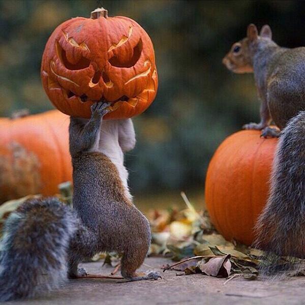 Squirrel stealing a pumpkin: http://t.co/dAvjDoJTjn