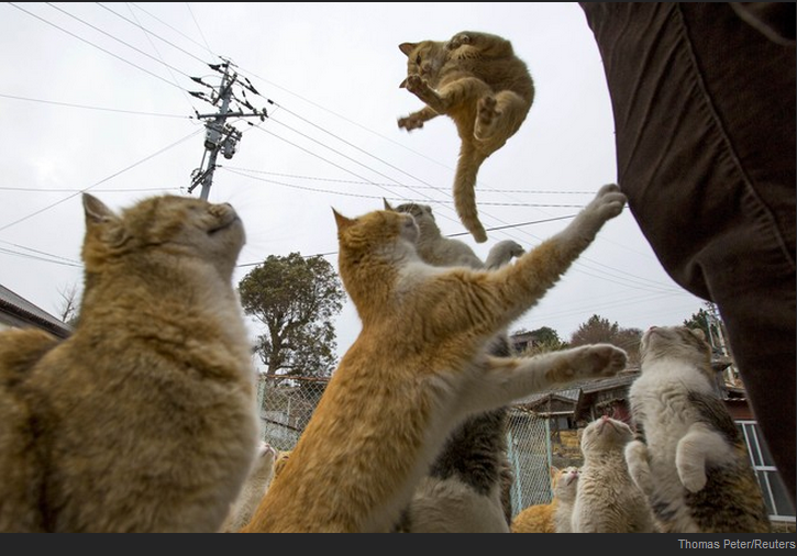 In Japan there is an island full of cats, and here are some photos http://t.co/HVvSvcLqNS