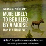 In #Canada youre more likely to be killed by a moose then a terror plot: http://t.co/LNJ4wlPchJ #cdnpoli #c51 #fear http://t.co/MXjreEivJd