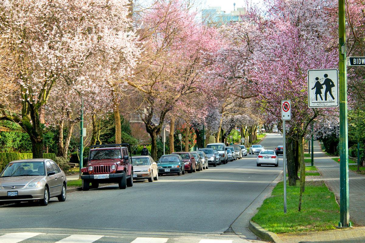 バンクーバー・ダウンタウンの住宅街ウエストエンドは春爛漫!  現地3月3日の様子です。 http://t.co/k5yNgARiHj