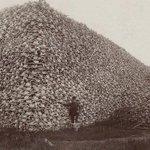 1870 год. Гора из черепов бизонов, убитых армией США, чтобы индейцы от голода вынуждены были покинуть свою территорию http://t.co/yJ0u0Aqgtj
