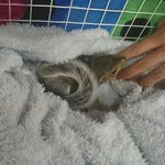 Baby squirrels rescued #CapeTownfire #Noordhoek. Consider donating to Volunteer Wildfire http://t.co/kxZSAyuvY1 http://t.co/ibaTZxd5rK