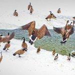 Winter in London Ontario is almost over :( #LdnOnt  more pics -> http://t.co/jSxwgPdDmi http://t.co/FGJ7AwwW0U