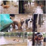 """@marisalilin: @beatrizarcusin La Soc Prot de Chabás #SantaFe inundada. Nec ayuda! http://t.co/JTOj06q0Vb""/ Cc @KarenReichardt1 @ursuvargues"