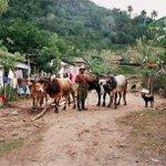 #Cuba + #internet = #democracia (?). http://t.co/3gaf52uZNi http://t.co/qfYrK1RQjY