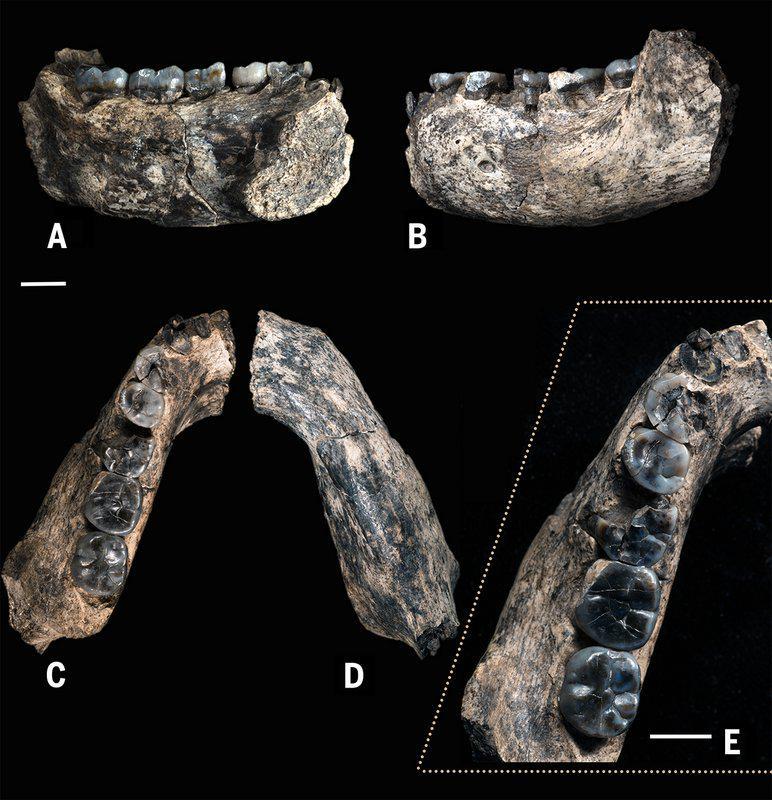 """#ÚltimaHora """"Aparece el primer abuelo Homo"""" http://t.co/wKLaWj2ADt somos 400.000 años más viejos de lo que creíamos http://t.co/Vxo1h2UoJW"""