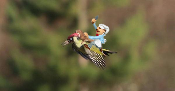 A foraging we go............ #WeaselPecker #cheflife http://t.co/tx8g9p6jiv