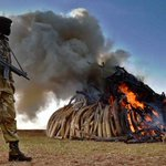 ACHIM STEINER: Let us unite to fight illegal wildlife trade http://t.co/PCz6KkyXhs @UNEP http://t.co/jzYj1xF28L