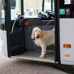 Cães chegam de transporte público para competição canina na Inglaterra http://t.co/oPTZ6S9hoy #G1 #aquepontochegamos http://t.co/Lfo00HdbmE