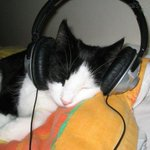 RT @C5N: Un estudio dio a conocer qué música prefieren escuchar los gatos http://t.co/iSe0kUx5pX http://t.co/MyD7DWrikq // Atento Pillud.
