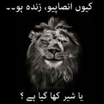 Dedicated to the (still) PTI supporters all across twitteristan #Senate4PMLN http://t.co/siEeDR1mk3