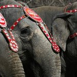 Ringling Bros. ending elephant acts over animal treatment concerns: http://t.co/ai2ogvgIZB (Brendan McDermid/Reuters) http://t.co/EzCfO6EF7x
