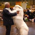 Começa na Inglaterra a maior feira de cães do mundo; veja mais fotos http://t.co/bewLzv3Wzo http://t.co/qbp0NRruCN