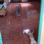 Kucing ini pun tidak tahan dengan cuaca panas . http://t.co/YMz2I5Lope