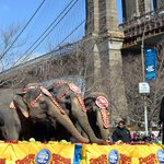 #Brooklyn @BPEricAdams thanks Ringling Bros. for plan to eliminate elephant acts at circus. http://t.co/y0owtGv28X http://t.co/qWuByU9Oql