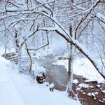 The snow has created some beautiful scenery in Arlington. @capitalweather #readyforSpring http://t.co/Fa4Bmd2Qtw