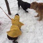Columbia Pike snowball fight. And puppies! @ARLnowDOTcom @ArlingtonCPRO http://t.co/drlqtujXW7