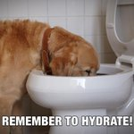 it IS important to hydrate! LOL RT @1mobilesocial: @PaulaAbdul #NationalPuppyDay RT @subaru_usa: Remember to hydrate! http://t.co/K4ZwxcqhtG