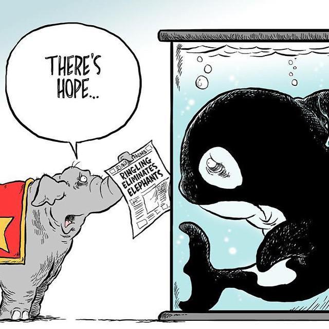 .@RinglingBros is phasing out elephants  Your move, @SeaWorld   #EmptyTheTanks http://t.co/ZkAsgggEjs
