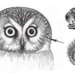 수천킬로미터를 날아다니는 철새들이 어떻게 해마다 목적지를 정확히 찾아갈까. 새는 어떻게 한쪽 눈을 뜨고 잘까. 과소평가된 새들을 위한 책 <새의 감각>이 나왔습니다. http://t.co/JM3ay2XulU http://t.co/v7QuW64jAN