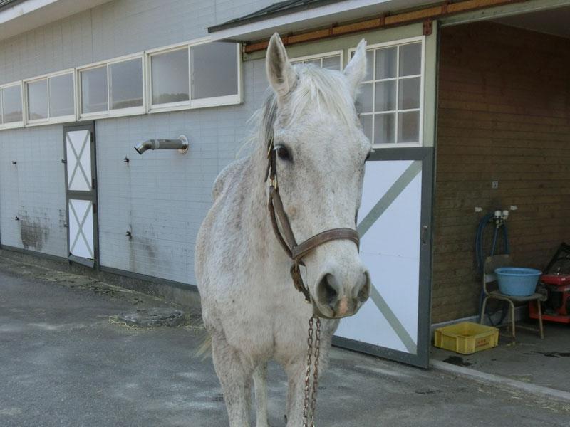 引退名馬情報 オグリローマンの死亡について  1994年の桜花賞優勝馬のオグリローマンが3月3日に死亡したとの連絡がありました。  http://t.co/QZ38WjEPvs http://t.co/uGJfFFFUco