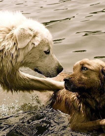 """楽しいデートだね♪礼。 RT @kmlpoe: """"@vitali_giuseppe: Respect Animals"""