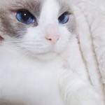 Kucing ni lagi lawa dari budak perempuan kat kelas aku http://t.co/vF3y0GxObG