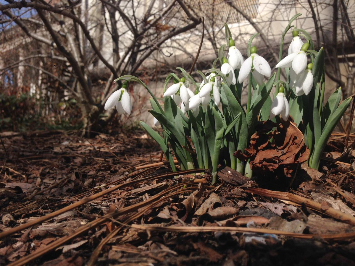 The snow is melting and signs of #spring are all around in #ProspectPark. Enjoy this lovely Friday afternoon! http://t.co/OMbYkAMU8t